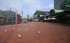 Seagulls are seen in an empty Darling Harbour in Sydney.
