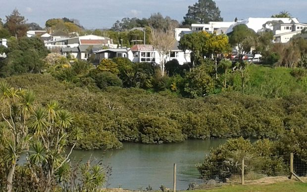 Water in Meola Creek in the heart of Auckland is not safe for drinking or swimming.