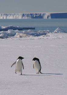 Antarctica's ice sheets hold three quarters of the world's freshwater, and if they melt they would cause a significant rise in sea level, which would be catastrophic both for local animals such as Adelie penguins as well as many large cities around the world.