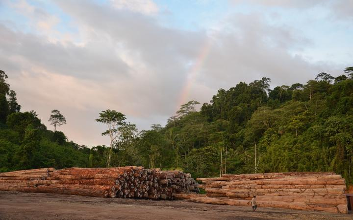 Piles of export ready logs on PNG's Manus Island, October 2019.