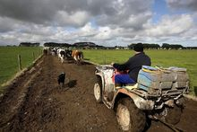Dairy farmers are expecting a a lower payout.