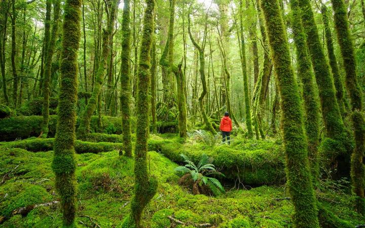 Fiordland re-directs focus to domestic market