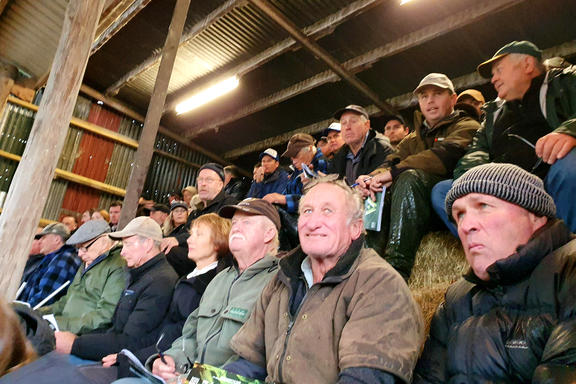 Wilencote bull sale near Gisborne