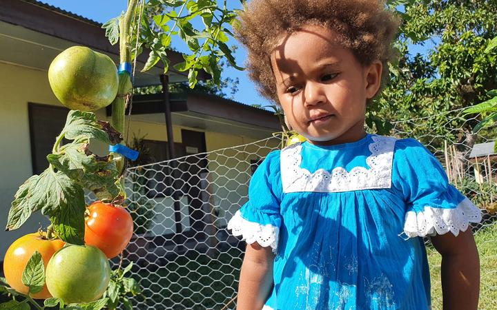 Food gardens for urban dwellers in Vanuatu's capital