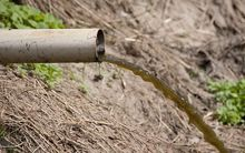 Effluent coming out of a pipe on dairy farm