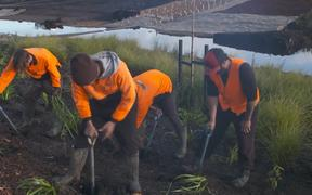 Workers for landscape company Rural Design hired through Ngā Puna Pūkenga.
