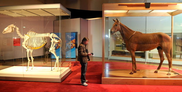 The hide and the skeleton of legendary racehorse Phar Lap appeared together at a special exhibition in Melbourne in 2010.