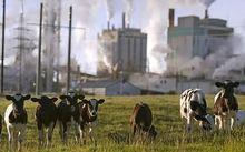 emissions and dairy