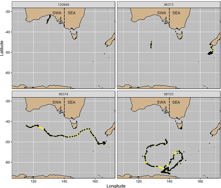 Satellite tags allow researchers to track the movements of southern right whales. Adult male 96373 (top right) was tagged at Auckland Island and moved to southern New Zealand and later on was recorded south of Australia, while adult female 