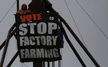 Dunedin animal rights activist Carl Scott on top of a farm silo tower to protest against factory farming