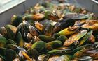 Green shell mussels on a conveyor belt in the Marlborough Sounds.