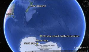 Map showing where the colossal squid was caught on Mawson Bank in the Ross Sea.