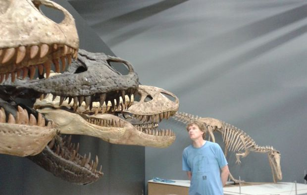 Te Papa curator Alan Tennyson with the skulls of several tyrannosaurs.