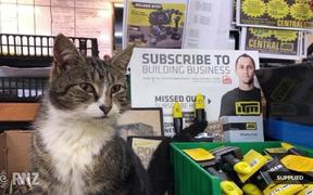 Rodney the hardware store cat missing again