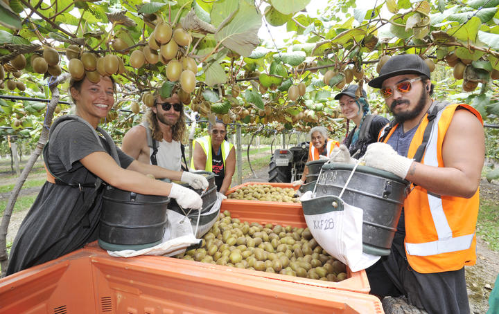 Gisborne's horticultural industry — of which about a third is kiwifruit by value — has seen a 79.5 percent increase in capital value over the past three years.