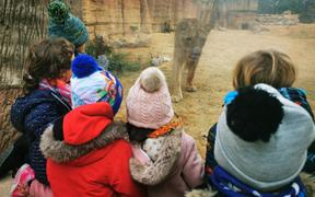 Children watch from behind glass a lion at Barcelona Zoo
