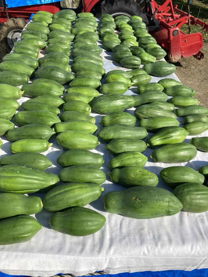 Papaya sent to Callaghan Innovation to be made into extract.