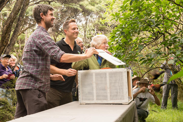 Project Island Song manager Richard Robbins, centre, helps supporters release saddlebacks onto a pest-free island, in 2015.