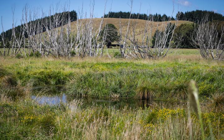Ecan wetlands restoration work