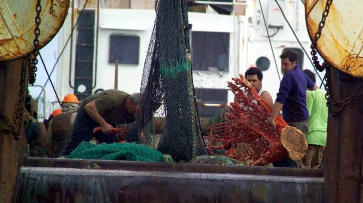 A picture supplied by Greenpeace of coral being pulled up by a trawler.