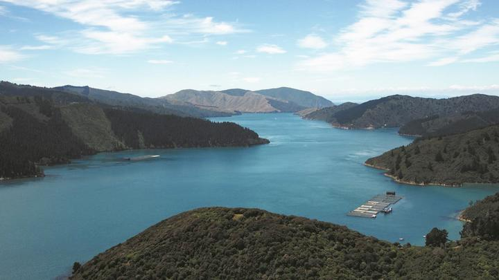 New Zealand King Salmon had hoped extending its Te Pangu Bay farm would prevent salmon from dying over hotter summers.