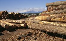 The study has identified the potential to turn forestry waste into biofuels.