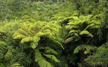 The Kaimai Ranges.