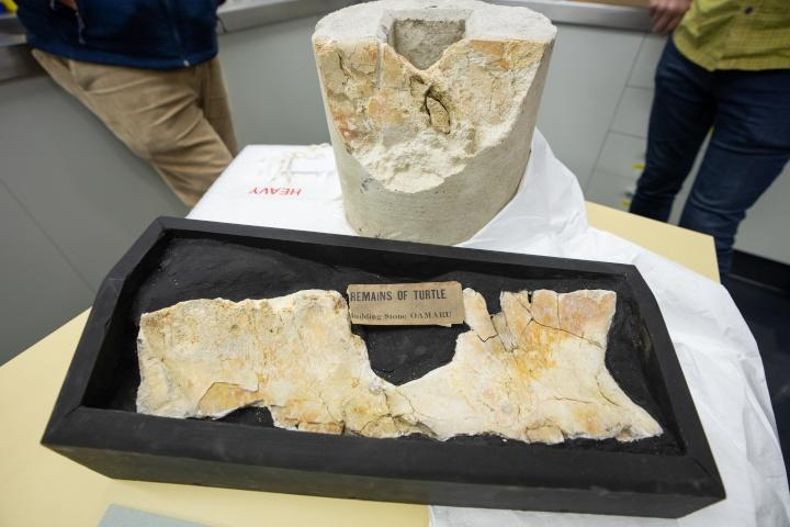 ]Canterbury Museum identified the  fossilised remains as those of a turtle that lived between 25 and 35 million years ago.