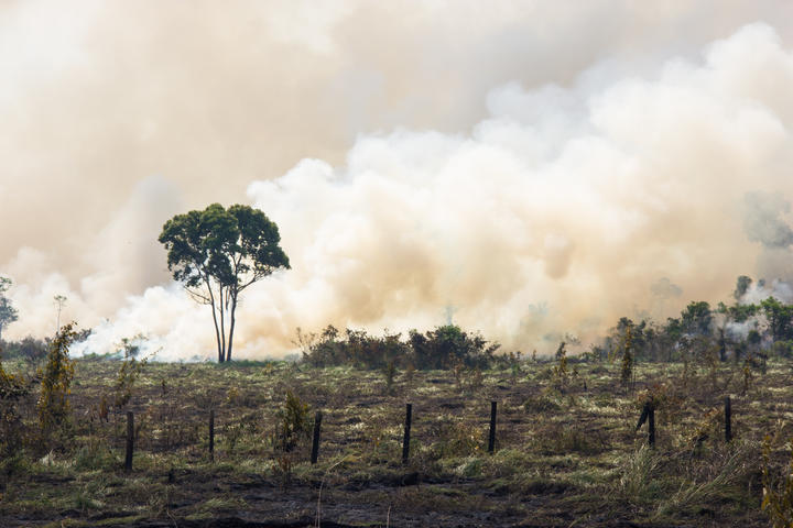 Queimando as florestas da Amazônia brasileira para abrir pastagens.