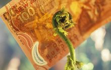fern frond in front of $100 bill