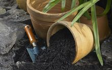 pot plant and soil -