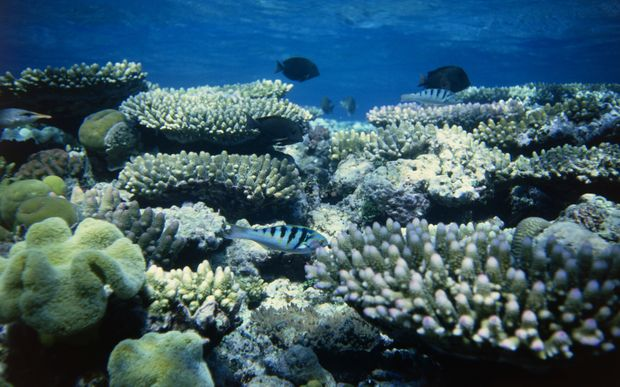 The Great Barrier Reef is the world's largest coral structure and home to rich marine life.