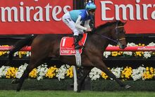 Admire Rakti during the Melbourne Cup.
