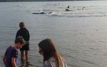 Local children, from left, Michael, Ben and Annabel Akroyd watch a pod of whales in Ohiwa Harbour.