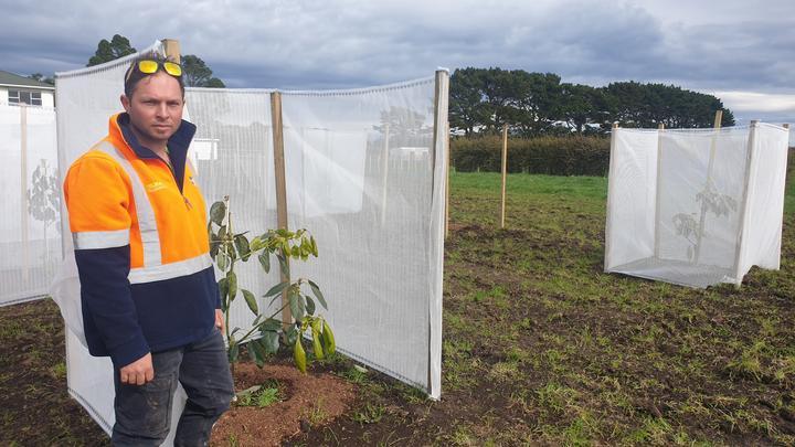 Matt Hareb is converting a 30-hectare dairy block into an avocado orchard in Braxton, near Vitara.