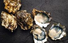 Pacific oysters whole and in the half shell