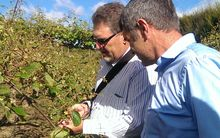 nathan guy and ian palmer at Riwaka orchard.
