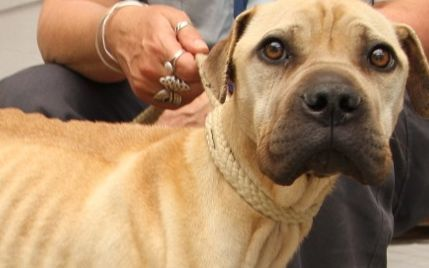 Whangarei SPCA inspectors rescued a record six emaciated dogs in October 2014.