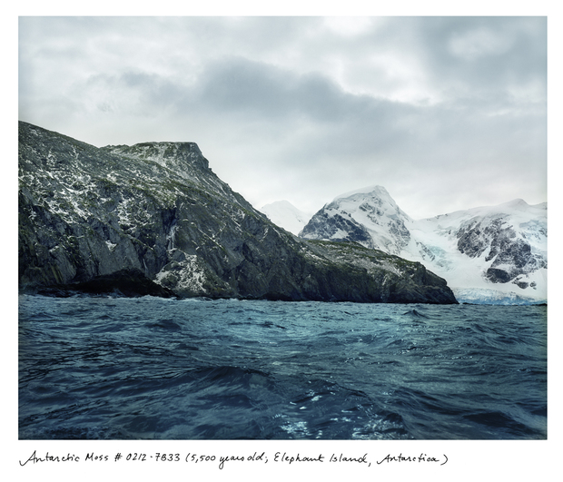 Rachel Sussman's Oldest Living Things project includes 5500-year-old moss on Antarctica's Elephant Island.