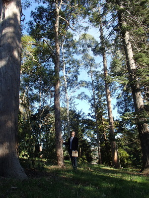Plant ecologist Steve Higgins stands amongst eucalypt trees in the Dunedin Botanic Gardens.