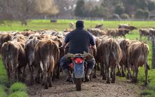 Both dairy farmers and the economy are buffeted by lower prices.