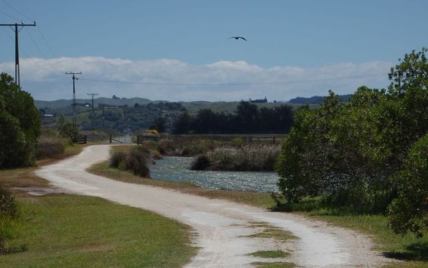 Napier Cycle Trail