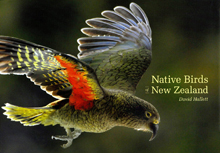 Cover of David Hallett's photographic book 'Native Birds of New Zealand'.