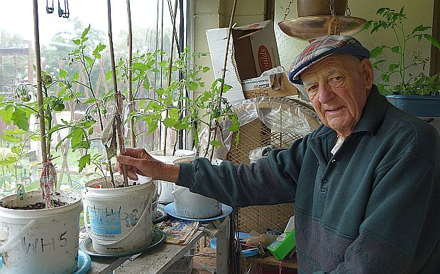 Inglewood pensioner, Cliff LeBeau, with potted tomatos