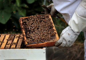 The Ministry for Primary Industries wants to be able to more accurately define the properties of manuka honey.