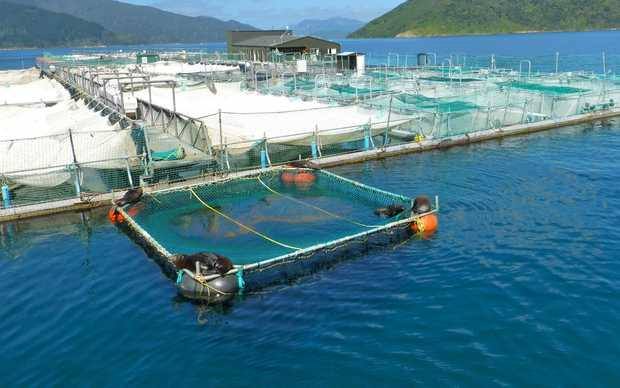 One of King Salmon's farms in Tory Strait.