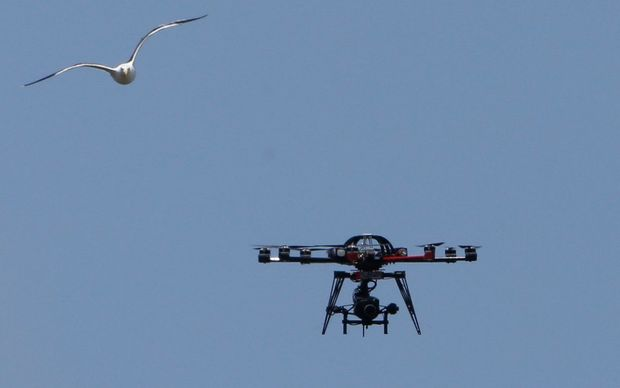 A seagull chases the TV drone on the second day of the second test beween NZ and Sri Lanka on 4 January.