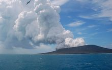 A frigate bird flying on the thermals from a new vent as steam and gas rise from the eruption of the Tonga volcano.