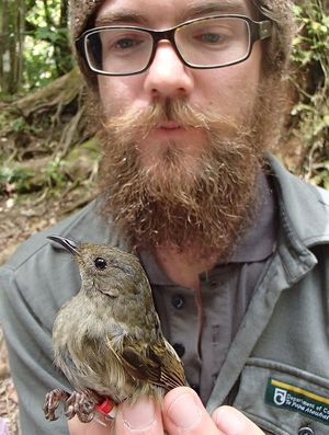 Ranger Nick Fisentzidis is responsible for the sugar water supplementary feeding programme, and for banding and monitoring the hihi population on Kapiti Island.
