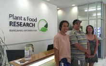 From left: Amy Maslen-Miller, Hone Ropata, Hanareia Ehau-Taumaunu - summer students at the Plant and Food research Centre in Auckland.